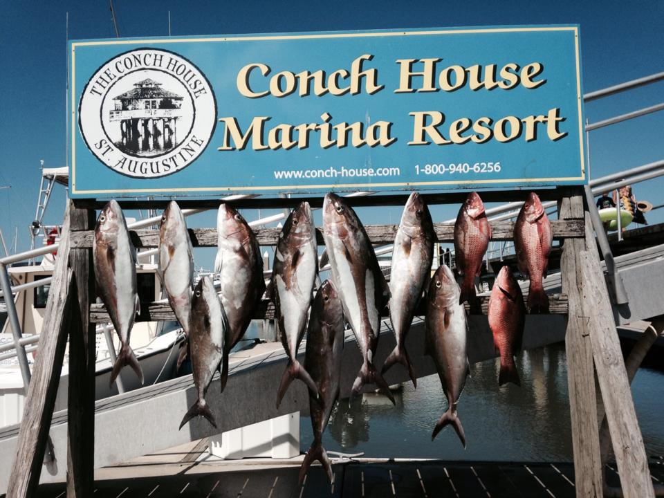 Fishing for Cobia